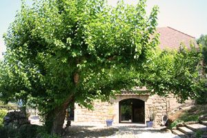 Hotel Restaurant with Mulberry tree